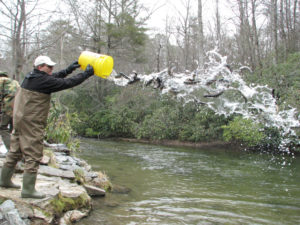 Little River Trout Stocking